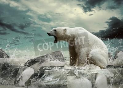 Image Blanc Polar Bear Hunter sur la glace dans des gouttes d'eau.