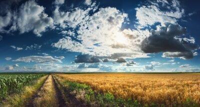 Image Blé et de maïs des champs avant la récolte