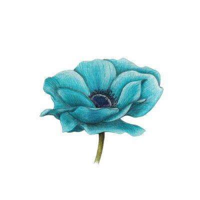 Image Bleu anémone