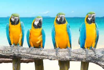 Image Bleu et or, Macaw, tropical, beau, plage, mer