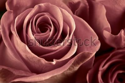 Image Bouquet de marsala couleur gros plan de fleurs roses comme arrière-plan. Flou artistique, DOF peu profond. Image filtrée.