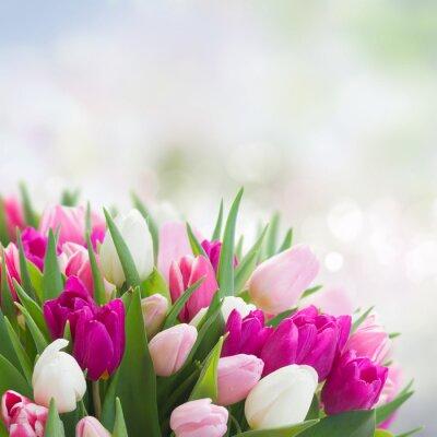 Image Bouquet de tulipes roses, violettes et blanches