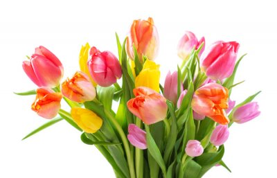 Image Bouquet of colorful tulips on white background