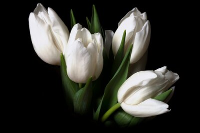Image Bouquet of white tulips on black background. Space for text.
