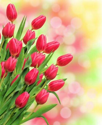 Image Bouquet, rose, tulipes, clair, nature, fond