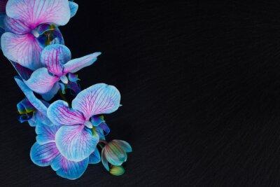 Image Bouquet, violet, orchidées