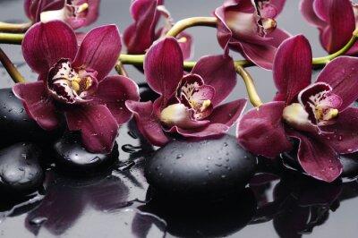 Image branche d'orchidée rouge avec des pierres de thérapie
