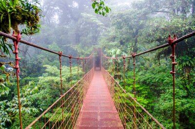 Image Bridge in Rainforest - Costa Rica - Monteverde