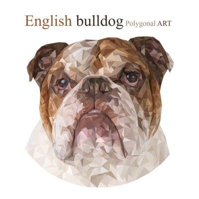 Image Bulldog anglais. Dessin polygonale ..