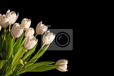 Image Bunch of white tulips isolated on black background with copy space