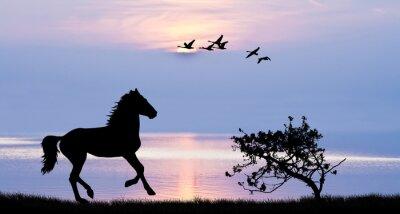 Image Caballo corriendo por el lago