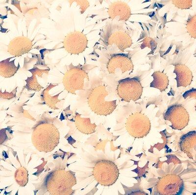 Image Camomille fleurs - style vintage