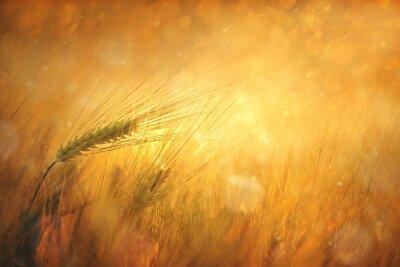 Image Campagne blé ensoleillée champ imaginaire fond