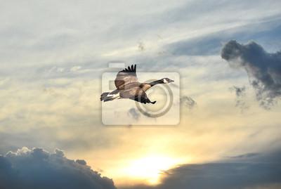 Image Canada Goode survolant un coucher de soleil