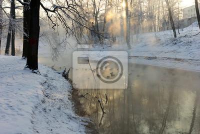 canards en hiver