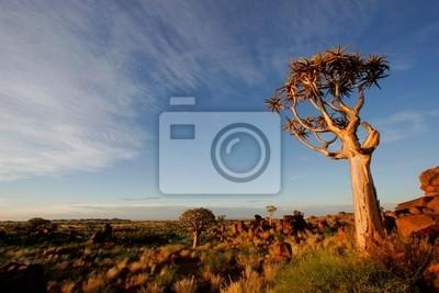carquois arbre paysage