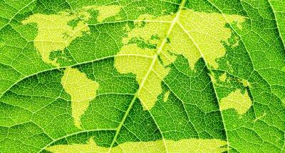 Image Carte du monde, continents en fond de feuilles vertes.