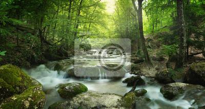 Image cascade de la forêt