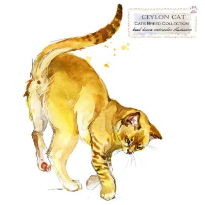 cat. home pet. breed of Cats series. cute kitten. watercolor domestic animal illustration.