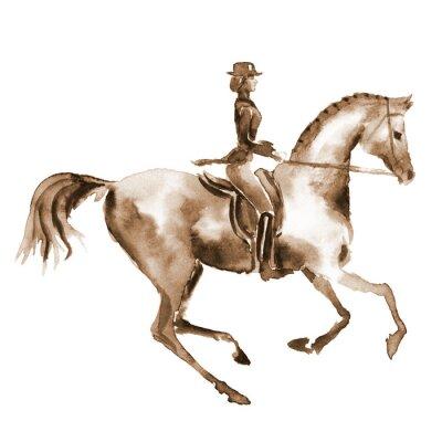Image Cavalier de l'aquarelle et cheval de dressage sur blanc. Sports équestres. Main, peinture, illustration, équine, fond