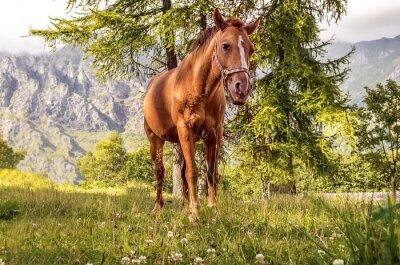Image Cavallo pascolo