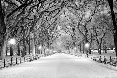 Image Central Park, NY covered in snow at dawn