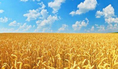 Image Champ de blé