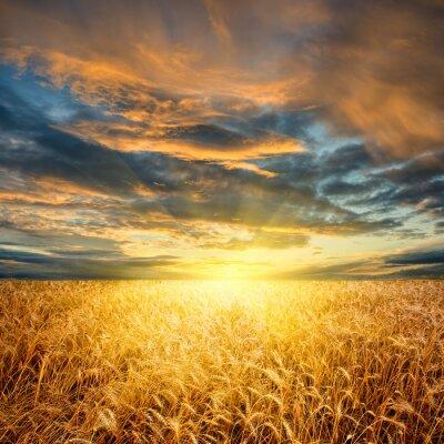 champ de blé horizontale
