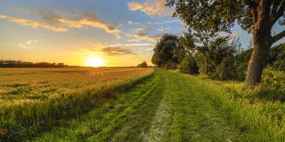 Image Champ de blé le long de la vieille piste de chêne