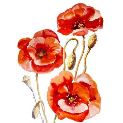Image Champ de fleurs de pavot