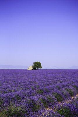 Image Champ, fleurir, lavande, fleurs, vieux, ferme, Provence, france
