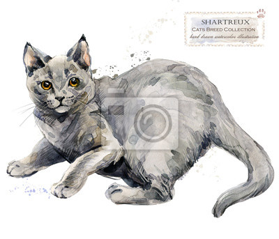Chartreuse cat. home pet. breed of Cats series. cute kitten. watercolor domestic animal illustration.