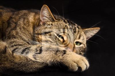 Chat domestique dans le meilleur âge