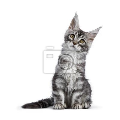 Www noir chatte photos com
