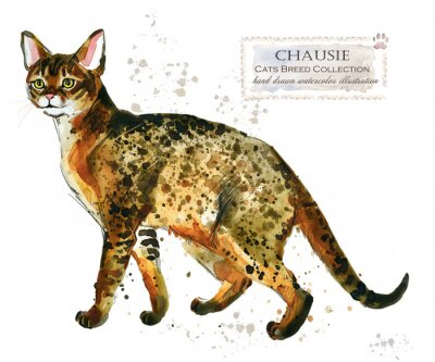 Chausie cat. home pet. breed of Cats series. cute kitten. watercolor domestic animal illustration.