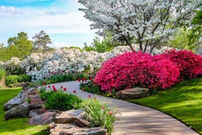 Image Chemin incurvé à travers les rives de Azeleas et sous cornouiller avec des tulipes sous un ciel bleu - Beauty in nature