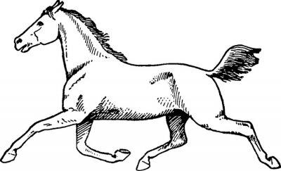 Image Cheval de dessin vintage