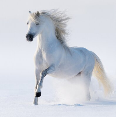 Image Cheval galopant blanc comme neige