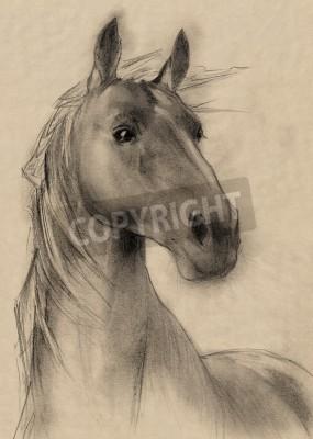 Image cheval main levée crayon de dessin tête