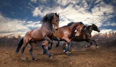 Image chevaux bais de saut sauvage