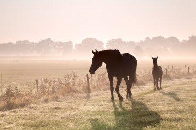 Image chevaux et poulains silhouettes dans le brouillard