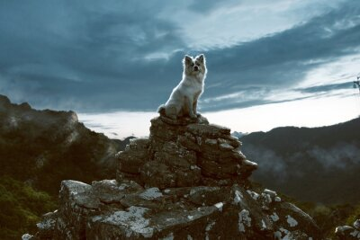 Image Chien, assied, rocher, montagnes