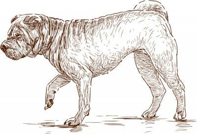 Image chien sur une promenade