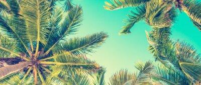 Image Ciel bleu et palmiers vue de dessous, style vintage, fond panoramique d'été