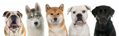Image Cinq chiens de race