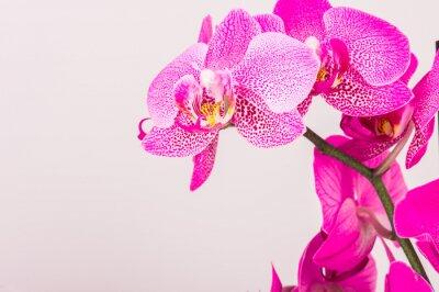 Image Close-up de la fleur d'orchidée