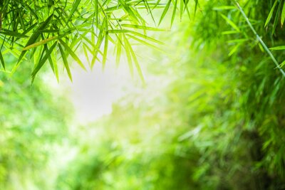 Image Closeup beautiful view of nature green bamboo leaf on greenery blurred background with sunlight and copy space. It is use for natural ecology summer background and fresh wallpaper concept.