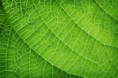 Image Closeup of a green leaf