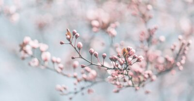Image Closeup of spring pastel blooming flower in orchard. Macro cherry blossom tree branch.