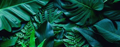 Image closeup tropical green leaf background. Flat lay, fresh wallpaper banner concept